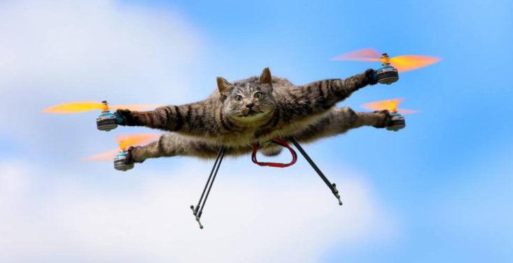 Dall'Olanda col DroneCat